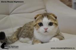 Gloria Mouse Nightmare
