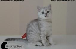 Dexter Mouse Nightmare