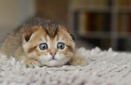 Kitsu Mouse Nightmare
