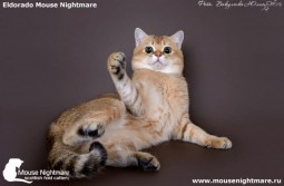 Mister Cat Mouse Nightmare