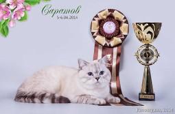 Champion Gelioland